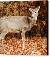 Portrait Of A Deer Canvas Print by Kathy Jennings
