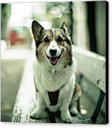 Portrait Of Dog Canvas Print by Moaan