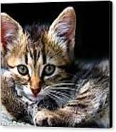 Posing Kitty Canvas Print