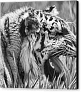 Predator Canvas Print by Naman Imagery