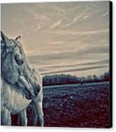 Profile Of A Horse Canvas Print by Toni Hopper