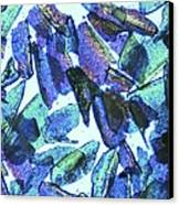Psyllium, Light Micrograph Canvas Print by Pasieka