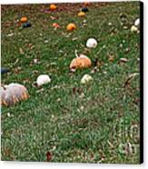 Pumpkins Canvas Print by Susan Herber