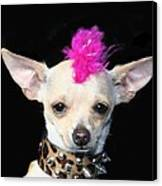 Punk Rock Chihuahua Canvas Print by Ritmo Boxer Designs