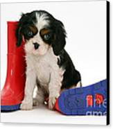 Puppies With A Childs Rain Boots Canvas Print
