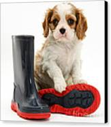 Puppy With Rain Boots Canvas Print by Jane Burton