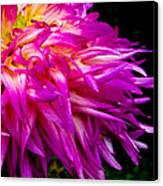 Purple Flames Canvas Print by Michael Taggart