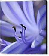 Purple Flower Close-up Canvas Print