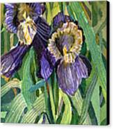 Purple Irises Canvas Print by Mindy Newman
