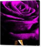 Purple Velvet Rose Canvas Print by EGiclee Digital Prints