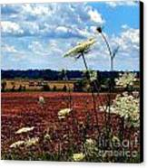Queen Annes Lace And Hay Bales Canvas Print