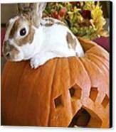 Rabbit Joins The Harvest Canvas Print by Alanna DPhoto