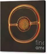 Radiolarian Lm Canvas Print