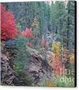 Rainbow Of The Season Canvas Print by Heather Kirk