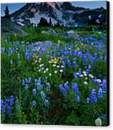 Rainier Wildflower Dawn Canvas Print by Mike  Dawson