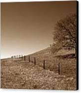 Ranch Road Oak Canvas Print