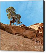 Reaching For The Sun Canvas Print by Bob and Nancy Kendrick