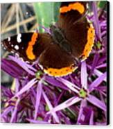 Red Admiral Butterfly Canvas Print by Maria Scarfone