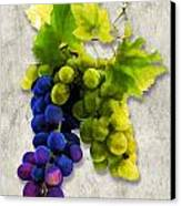 Red And White Grapes Canvas Print