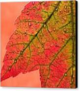 Red Autumn Canvas Print by Carol Leigh