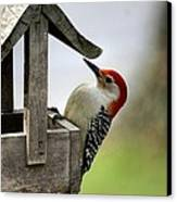 Red Bellied Woodpecker Canvas Print by L Granville Laird