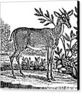 Red Deer Canvas Print by Granger