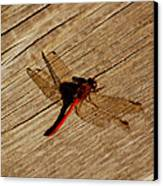 Red Dragon Fly Canvas Print by LeeAnn McLaneGoetz McLaneGoetzStudioLLCcom