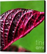 Red Leaf Canvas Print by Kaye Menner