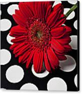 Red Mum With White Spots Canvas Print by Garry Gay