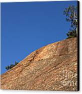 Red Pine Tree Canvas Print by Ted Kinsman