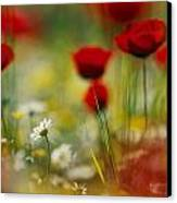 Red Poppies And Small Daisies Bloom Canvas Print by Annie Griffiths