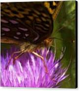 Reflection In The Wing Canvas Print