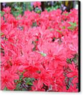 Rhodies Art Prints Pink Rhododendrons Floral Canvas Print by Baslee Troutman