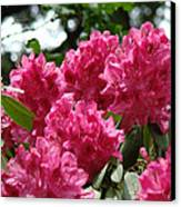 Rhododendrons Garden Art Prints Pink Rhodies Floral Canvas Print by Baslee Troutman