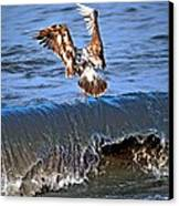 Riding The Wave  Canvas Print by Debra  Miller