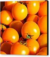 Ripe Yellow Tomatoes Canvas Print by Connie Cooper-Edwards