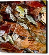 River Leaves Canvas Print by LeeAnn McLaneGoetz McLaneGoetzStudioLLCcom