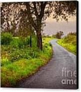 Road On Woods Canvas Print by Carlos Caetano