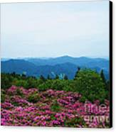 Roan Mountain Canvas Print by Crystal Joy Photography