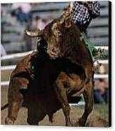 Rodeo Competitor In A Steer Riding Canvas Print by Chris Johns