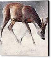 Roe Buck - Winter Canvas Print by Mark Adlington