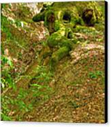 Roots Of A Tree At Ciucaru Mare Forest Canvas Print by Gabriela Insuratelu