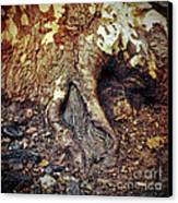 Roots Canvas Print by Silvia Ganora