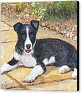 Rory Border Collie Puppy Canvas Print by Richard James Digance