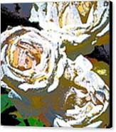 Rose 126 Canvas Print by Pamela Cooper