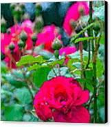 Rose 132 Canvas Print