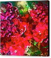 Rose 143 Canvas Print by Pamela Cooper