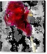 Rose Canvas Print by Mauro Celotti