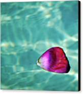 Rose Petal Floating On Water Canvas Print by Gerard Plauche