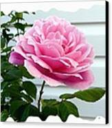 Royal Kate Rose Canvas Print